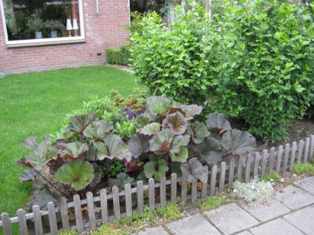 Naam van plant met bruin niervormig blad