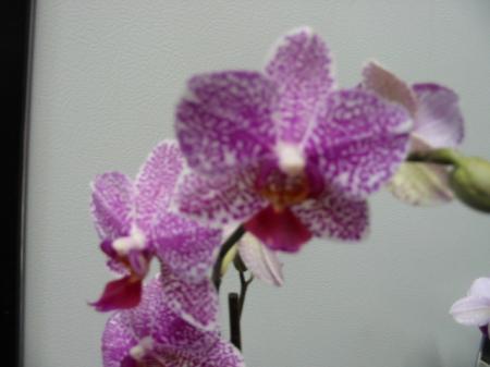 Orchideeen websites waar kan ik GRATIS terecht?