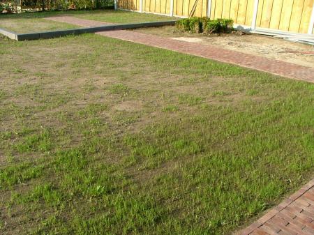 FOTO Nieuw gazon, veel onkruid - weinig gras. help