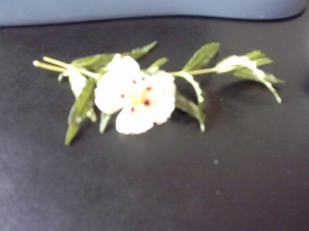 onbekende plant