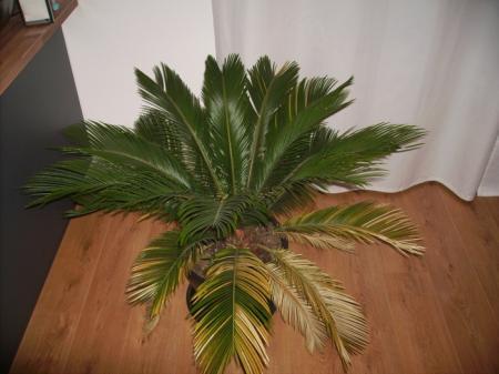 Waar heeft deze palm te veel of te weinig van?