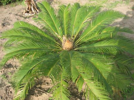 De naam van deze plant graag