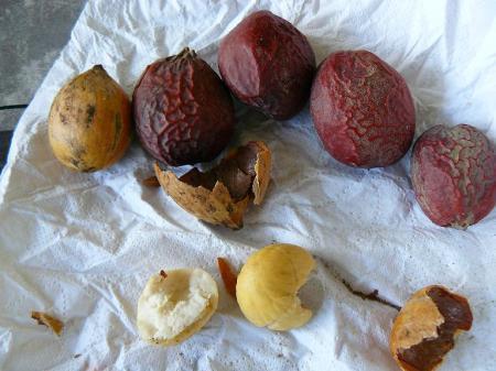 wie weet welke zaden dit zijn??