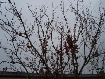 boom komt niet in blad en bloei