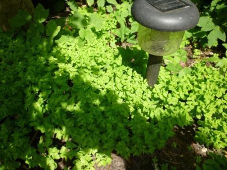 wat zijn dit voor planten?