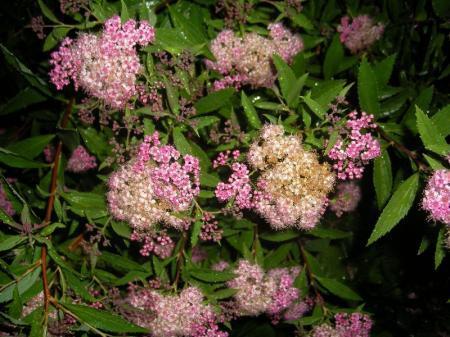 Naam plant