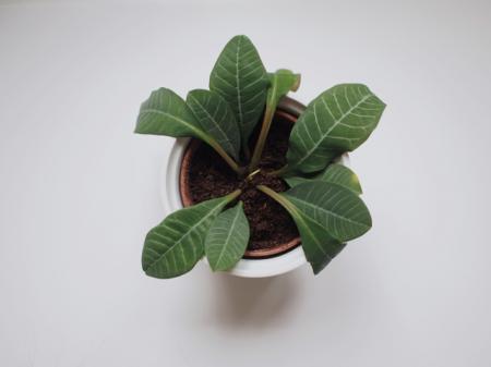 weet iemand de naam van dit plantje