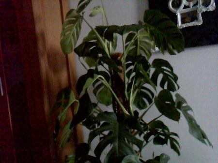 welke plant is dit en hoe nu verder?