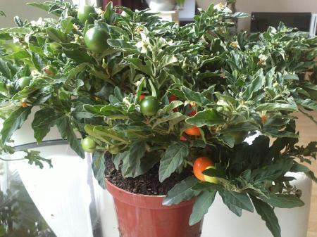 Plant van de Aldi