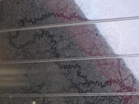 Van welk dier zijn deze sporen?