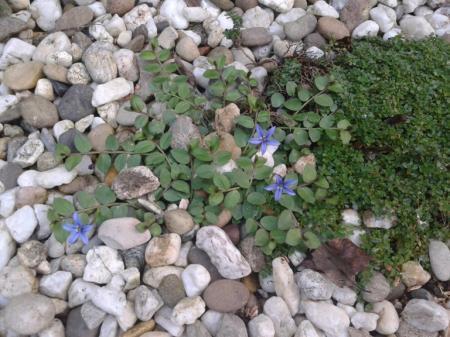 naam van dit kleine plantje