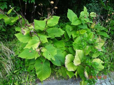 Plant gezien in Beieren