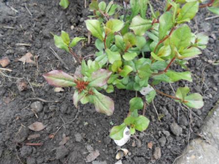 Hoe heet dit plantje?