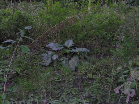 Onbekende (bos)plant