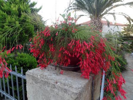Welke plant is het?