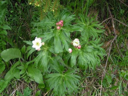 Identificatie planten en bloemen
