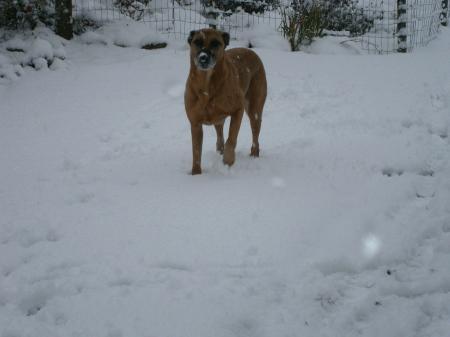 lekker in de sneeuw spelen!!!