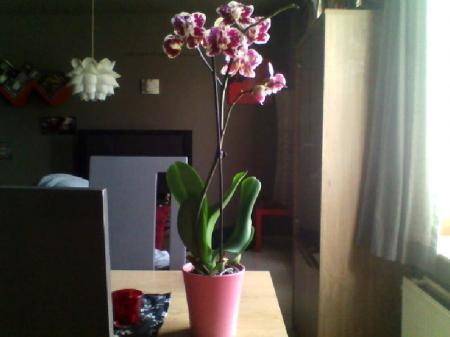 orchidee volledig hersteld