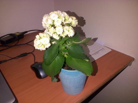 wat is dit voor een plant?