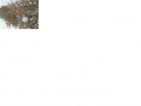 Hoe heet deze struik en hoe moet ik snoeien