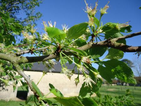 Wie weet wat voor een boom dit is?