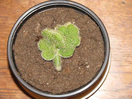 Cactus, maar wat voor een?