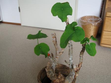 over een plant die wij thuis hebben