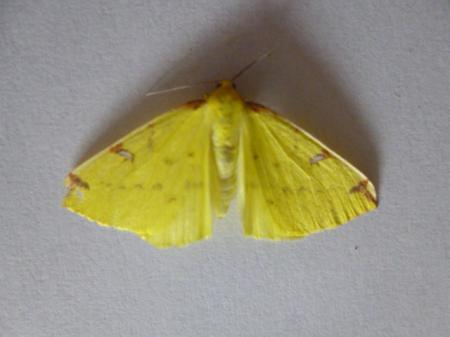 onbekende vlinder binnen