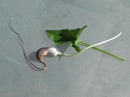 plantje met uniek bloemetje