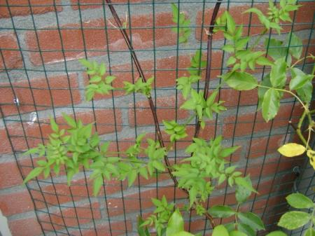 Plantennaam gezocht