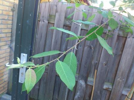 welke boom/plant is dit?