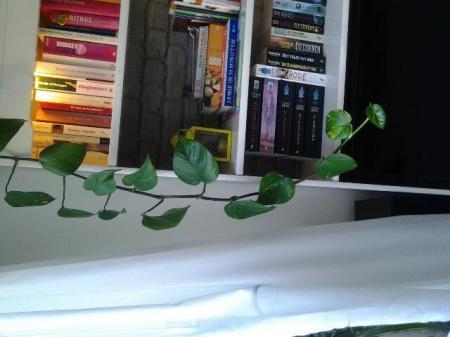 welke hangende plant?