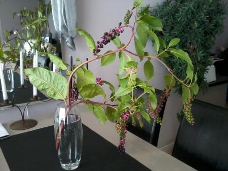 Welke plant is dit..??