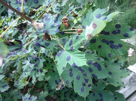 Stippen op bladeren