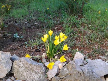 welke bloem?