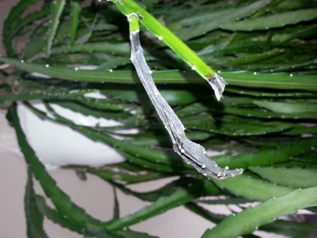 soort plant