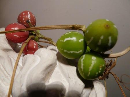 groene bes, verkleurt rood