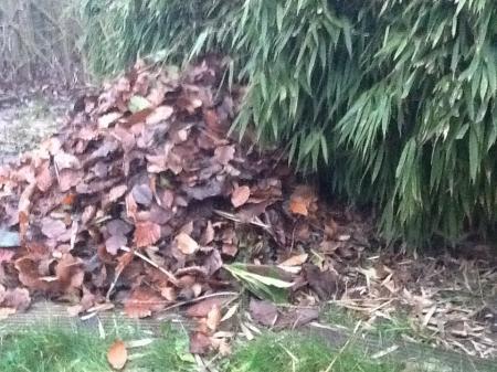 Egel nest in tuin goed zo?