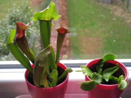 verzorging vleesetende planten