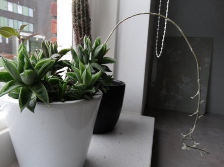 verschillende succulenten