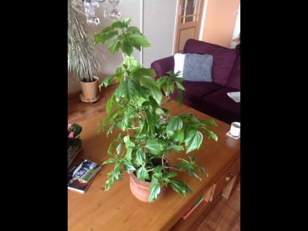 Hoe heet deze plant?