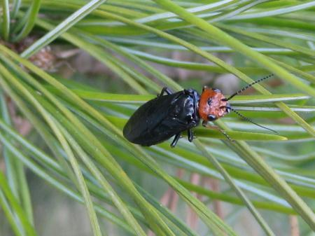 wie weet wat voor insect dit is?