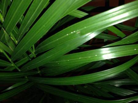 Witte puntjes op bladeren en stelen