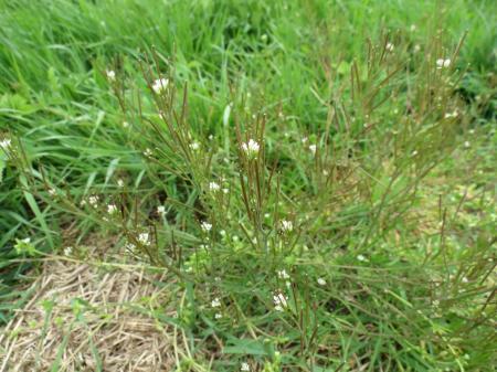 herkenning wilde planten (2)