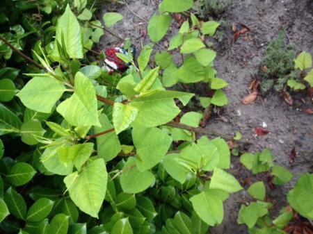 Wat is dit voor een plant en hoe kom ik ervan af..