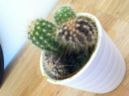 HELP mijn cactus is zwart/bruin en zeer slap