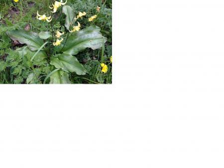 ,Wilde'? Orchidee