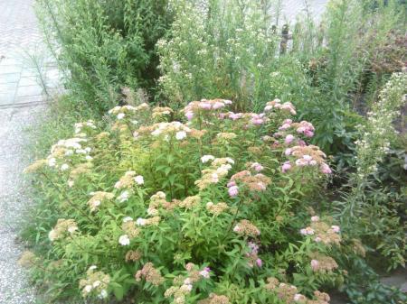 Net een nieuwe tuin en welke plant is dit