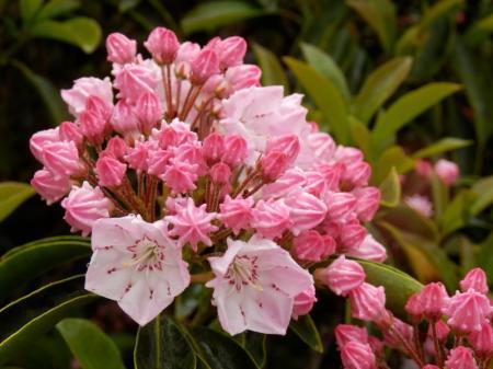 Wat zijn de namen van deze bloemen/planten?