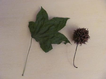 Van welke boom komt deze vrucht